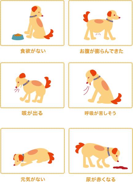 犬フィラリア症症状