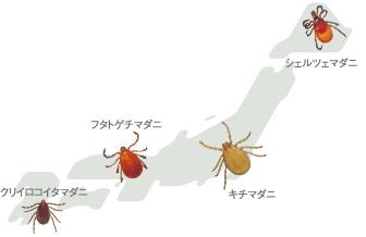 日本に生息するマダニ