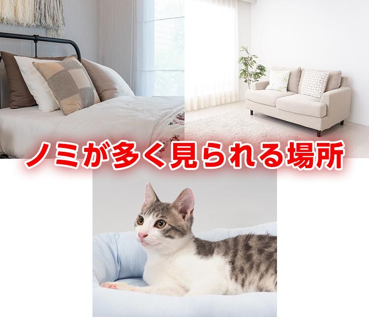 ノミ 人間 猫